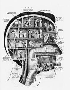 Vintage brain segment activity schematics