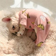 Pink Comfy Dog Jumpsuit Pajamas for Bulldogs Cute Dog Clothes, Small Dog Clothes, Cute Dog Outfits, Clothes For Dogs, Puppy Outfits, Bulldog Puppies For Sale, French Bulldog Puppies, Small French Bulldog, Fawn French Bulldog