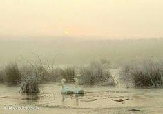 Elk jaargetijde is het bij ons genieten. Net zoals vanmorgen. De zon komt op ze waren net door het ijs gezakt. -7 graden en een hele dichte mist in de Weerribben. Zo'n mooie droomwereld...  Foto en tekst: Wieja van der Kamp