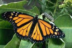 Erik ontmoet een vlinder, die hem zal helpen bij het terugvinden van de lijst. De vlinder verlaat hem als hij verliefd word.