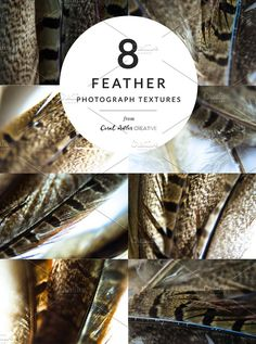 Feathers Texture Pack by Coral Antler Creative on @creativemarket