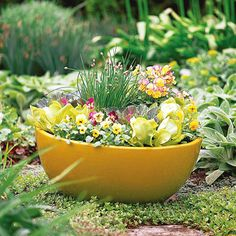Enjoy Edibles: While it's easy to focus on ornamental favorites, edibles work just as well. A mix of spring greens will provide salads while looking great in the landscape. Accent both the container and your salads with the cheerful and tasty viola blooms. Here, chives tossed in the middle of the pot create a fun textural contrast. Hint: Try the full range of spring greens, including spinach, kale, and red, green, and bicolored lettuce.