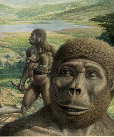 Australopithecus africanus Thrived between 3.5m and 2.5m years ago and had roughly the same stature as afarensis - although its front teeth were smaller and its face slightly flatter. It, too, was mainly vegetarian in diet.