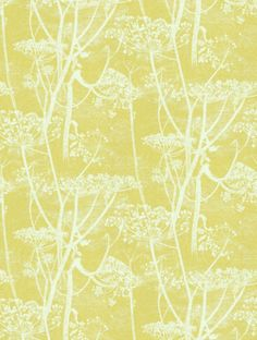 Cow Parsley, a feature wallpaper from Cole and Son, featured in the Contemporary Collection collection.