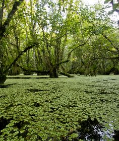 The river of grass that defines the Florida Everglades is iconic...an unbelievable sight and perfect for gliding across at top speeds on an airboat tour at Everglades Holiday Park!  www.evergladesholidaypark.com Photo credit: Chris Gillette