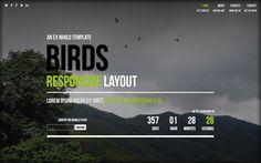 Birds coming soon #Template #website #onepage