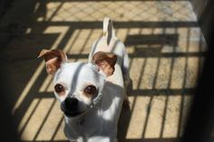 NAME: MOE ID: A1253290 INTAKE: 6/1/13 Sex: MN Weight: ~5-10# Age:  BREED: CHIHUAHUA X KENNEL NO: 364 INTAKE STATUS: STRAY OC Animal Shelter 561 The City Drive South Orange, CA 92868 *714-935-6848* Sunday through Saturday - 10:00 AM to 5:00 PM  https://www.facebook.com/photo.php?fbid=10102338701180906=a.10100783147827296.2983075.2522712=1