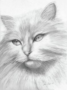 Himalayan Cat Drawing # Cats drawing Himalayan Cat by Lena Auxier Cat Drawing, Drawing Sketches, Painting & Drawing, Drawing Ideas, Drawing Faces, Parrot Drawing, Drawing Tips, Animal Drawings, Pencil Drawings