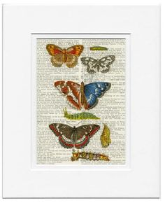 butterflies V - vintage artwork printed on old dictionary page via Etsy