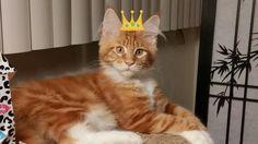 His Highness, King Leon Hambone