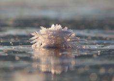 No oceano Ártico acontece um fenômeno raro e curioso sobre a extensa camada de gelo, são o surgimento de milhões de pequenas flores de g...