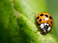 The ever new collection of ladybug leaves insect desktop wallpaper