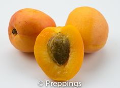Apricot :: Search by flavors, find similar varieties and discover new uses for ingredients @ preppings.com