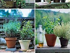 Grow Your Own Medicinal Herb Garden