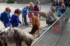 De mobiele Kinderboerderij de Loi uit Wellerlooi bezocht basisschool de Pas met een heleboel dieren. De kinderen van de groepen 1 t/m 4 mochten knuffelen en aaien.