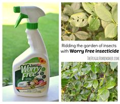 rid your garden of insects with Worry Free insecticide Yard Sale Finds, Spray Bottle, No Worries, Rid, Insects, Stress, Gifts, Garden Ideas, Green