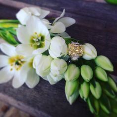 Thinking of proposing?  Looking for the perfect ring?  Stop by our Bridal Design Gallery and let one of our expert staff help you find the perfect engagement ring...we have designers like Louis Glick, Henri Daussi, Simon G, Forevermark, Sylvie, Kirk Kara, and so many more!! Love this yellow diamond Louis Glick engagement ring! #diamonds #weddingWednesday #LouisGlick #yellowdiamond #engagementring #proposal #shesaidyes #mccaskillandcompany