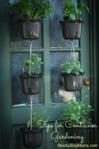 Awesome tips for container gardening!