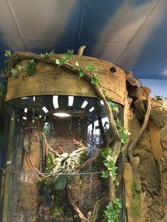 Reptile enclosure