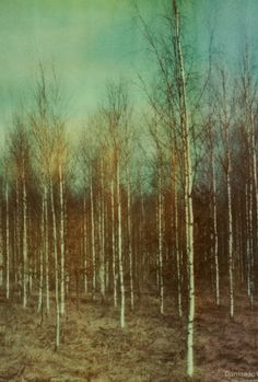 In love with Dan Isaac Wallin - a swedish photographer who turns Nordic Nature into amazing art using old polaroid cameras