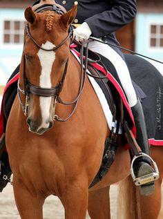 Dressage at Devon 2011 beautiful horse
