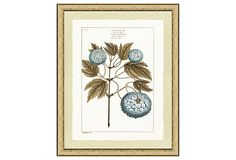 Blue Botanical Print I on OneKingsLane.com
