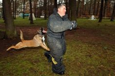 Most Amusing Unexpected Events Captured on Camera - bemethis Animal Attack, Dog Attack, Military Dogs, Police Dogs, Protection Dog Training, Dog Pictures, Funny Pictures, Dog Photos, Funny Images