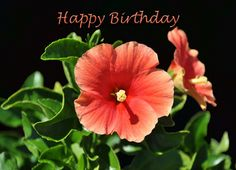 Peach Hibiscus Floral Happy Birthday Greeting Card