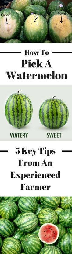 Here's how to pick a watermelon. Follow these great tips from an experienced farmer so you can get the choose the sweetest fruit! We've also included how to cut a watermelon so you can enjoy this delicious fruit in any food you want - a salad, smoothie, or by itself! #watermelon #fruits #lifehacks #fruit_gardening