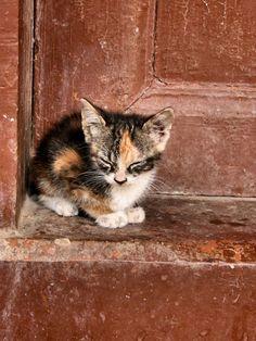 Sweet lil kitty!