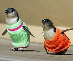 penguins wearing sweaters, oil spill clean up