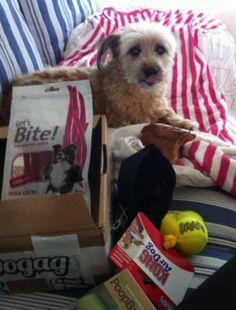 Toby - DoggieBag.no #DoggieBag #Hund