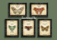 Vintage Butterfly Wall Art butterfly moth art printed poster home decor