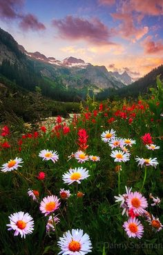 to Focus in Landscape Photography For Good Results Daisy sunset at Alpine Lakes Wilderness in the Cascade Mountains of Washington photo: Danny Seidman.Daisy sunset at Alpine Lakes Wilderness in the Cascade Mountains of Washington photo: Danny Seidman. Eckhart Tolle Meditation, Beautiful World, Beautiful Places, Beautiful Flowers, Cascade Mountains, All Nature, Spring Nature, Belle Photo, Pretty Pictures