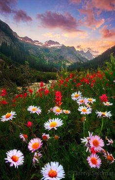 Amazing Photography Collection: Amazing Daisy sunset at Alpi