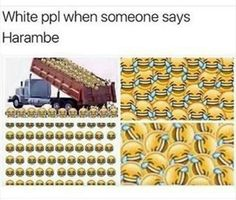 As a white person i can confirm this <<< as the whitest person in the galaxy i can confirm that this doesn't include me, but does in fact, include most of the male white population.