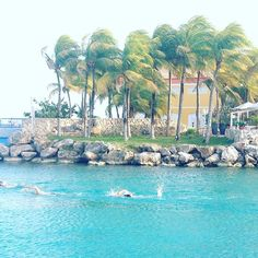 #curacao #swimmer #whataview #tropicalparadise