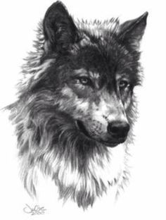Perfect example of the sketch like style I want for my half sleeve on my left arm. Although I want the wolf to be snarling a bit with Indian like beads and feather in the mane.