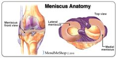 Medial meniscus, lateral meniscus of the tibiofemoral joint
