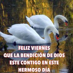 Feliz Viernes: Que la bendición de Dios esté contigo en este hermoso día
