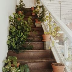 Imagem de plants, stairs, and aesthetic