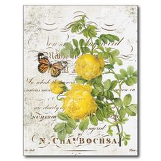>>>Low Price          Vintage French Botanical rose postcard           Vintage French Botanical rose postcard We provide you all shopping site and all informations in our go to store link. You will see low prices onHow to          Vintage French Botanical rose postcard Here a great deal...Cleck Hot Deals >>> http://www.zazzle.com/vintage_french_botanical_rose_postcard-239507798741336807?rf=238627982471231924&zbar=1&tc=terrest