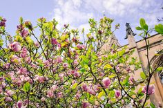 Oxford - Finnish Travel Blog. Spring is the gorgeous time of Magnolia blooms in Britain.