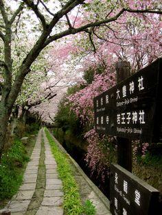 Philosopher's Path, Kyoto | by kukumaloo