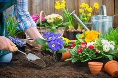 jardinage-fleurs.jpg (3000×2002)