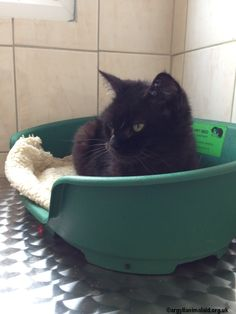 Susie is very friendly and loves attention. She would prefer to be the only cat in the house as she does not get on well with other cats. Please contact Jean on 01631 566406 if you feel that you can give one of our animals a forever home. Email rehoming@argyllanimalaid.org.uk