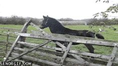 21 Best GIFs Of All Time Of The Week #214