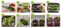 Flora, Fruit, Plant Propagation, African Violet, Plants, Gardening, Lawn And Garden, Plant, Planets