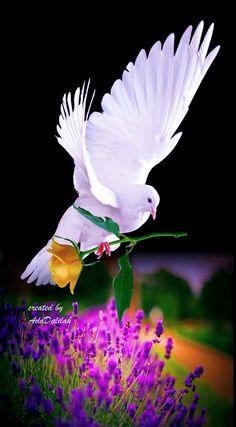 Ada Dalilah Rincon Boehemio - Google+ Beautiful Nature Pictures, Beautiful Gif, Beautiful Roses, Animals Beautiful, Dove Images, Dove Pictures, Jesus Pictures, Beautiful Landscape Wallpaper, Beautiful Flowers Wallpapers