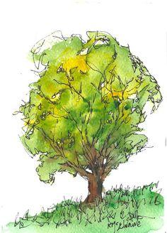 Kathleen McElwaine Art Studio: The Young Tree 7x5 Watercolor Nature